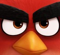 �������� ANGRY BIRDS � ����!